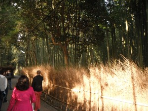 I love being in forests. A lot.  I now know that bamboo forests are no exception