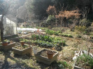 A portion of the vegetables grown at Aightowa.